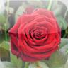 Blumeneck App